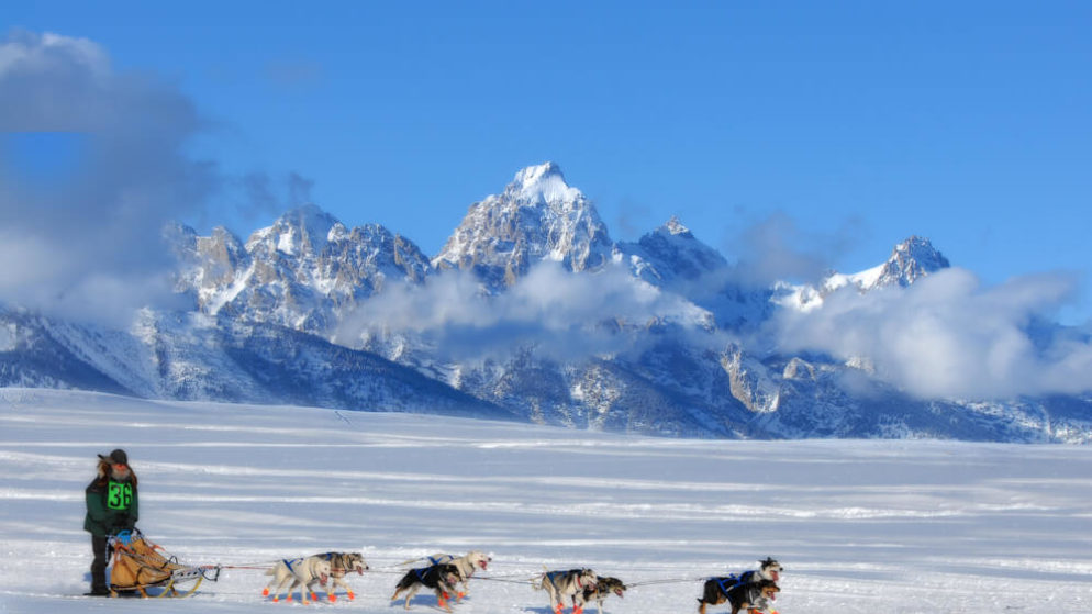 New Jersey Man Wins First Iditarod Trifecta