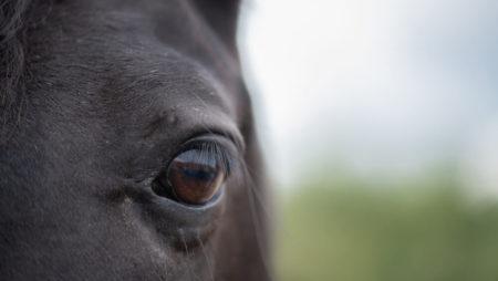 Racehorse Doping: Defendants Jorge Navarro & Jason Servis, $200,000 Bond, Strict Bail Conditions